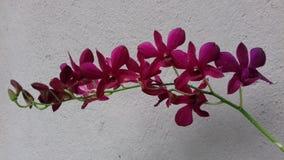 美丽的开花的兰花 库存照片