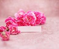 美丽的开花的康乃馨在与文本空间、葡萄酒和减速火箭的颜色口气的石背景开花 图库摄影