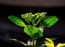美丽的开花的植物 库存图片
