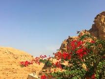 美丽的开花的灌木在沙漠 免版税库存图片