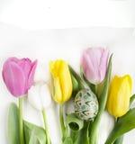美丽的开花的郁金香花和复活节五颜六色的鸡蛋 背景背景卡片设计花卉例证 背景蓝色云彩调遣草绿色本质天空空白小束 与美好的fres的春天背景 库存照片