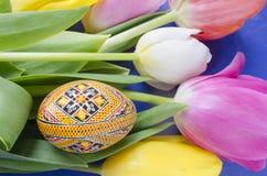 美丽的开花的郁金香花和复活节五颜六色的鸡蛋 背景背景卡片设计花卉例证 背景蓝色云彩调遣草绿色本质天空空白小束 与美好的fres的春天背景 免版税库存图片