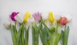 美丽的开花的郁金香花 背景背景卡片设计花卉例证 背景蓝色云彩调遣草绿色本质天空空白小束 与美丽的鲜花的春天背景 免版税库存图片