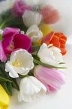 美丽的开花的郁金香花 背景背景卡片设计花卉例证 背景蓝色云彩调遣草绿色本质天空空白小束 与美丽的鲜花的春天背景 免版税库存照片