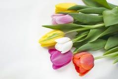 美丽的开花的郁金香花 背景背景卡片设计花卉例证 背景蓝色云彩调遣草绿色本质天空空白小束 与美丽的鲜花的春天背景 图库摄影