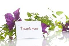美丽的开花的铁线莲属 免版税库存照片