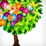 美丽的开花结构树 库存图片