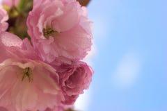 美丽的开花 库存图片