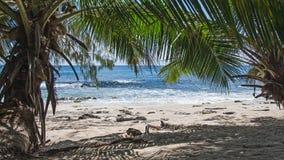 美丽的异乎寻常的海滩 免版税库存照片