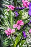 美丽的异乎寻常的热带花和弄湿了叶子安排,自然背景 库存图片
