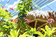 美丽的异乎寻常的热带蝴蝶在巴厘岛,印度尼西亚公园  库存图片