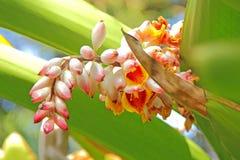 美丽的异乎寻常的花从下面 库存照片