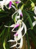 美丽的强烈的兰花花 图库摄影