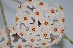 美丽的微小的五颜六色的hoja花 库存照片