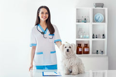 美丽的微笑的兽医医生和逗人喜爱的白色狗在狩医 免版税图库摄影