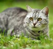 美丽的愤怒猫画象 免版税库存照片