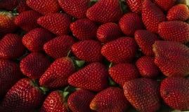 美丽的成熟草莓 库存照片