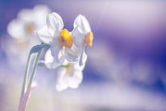 美丽的抽象自然郁金香和被弄脏的bokeh背景 免版税图库摄影