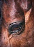 美丽的接近的眼睛马 免版税库存图片