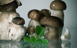 美丽的新鲜的健康蘑菇等概率圆porcini牛肝菌蕈类可食用牛至草本和大蒜 图库摄影