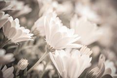 柔和的花卉背景 免版税库存图片