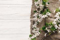 美丽的新鲜的樱桃分支与在土气很好的白花 免版税库存照片