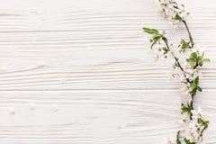美丽的新鲜的樱桃分支与在土气的白花求爱 免版税库存图片