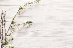 美丽的新鲜的樱桃分支与在土气的白花求爱 免版税图库摄影