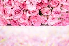 美丽的新鲜的甜桃红色玫瑰边界爱浪漫谷的 免版税库存图片