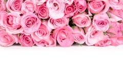 美丽的新鲜的甜桃红色玫瑰边界爱浪漫谷的 图库摄影