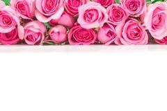 美丽的新鲜的甜桃红色玫瑰边界爱浪漫谷的 免版税图库摄影