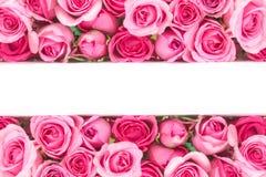 美丽的新鲜的甜桃红色玫瑰边界爱浪漫谷的 库存图片