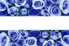 美丽的新鲜的甜蓝色玫瑰边界爱浪漫谷的 库存照片