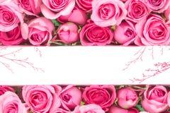 美丽的新鲜的甜蓝色玫瑰边界爱浪漫谷的 图库摄影