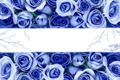 美丽的新鲜的甜蓝色玫瑰边界爱浪漫谷的 免版税库存照片