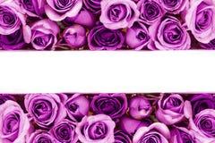 美丽的新鲜的甜紫色玫瑰边界爱的浪漫VA 免版税图库摄影