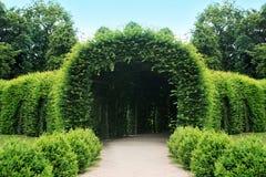 美丽的新鲜的绿色庭院在夏天 图库摄影