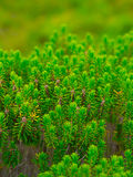 美丽的新水多的结构树 免版税库存照片