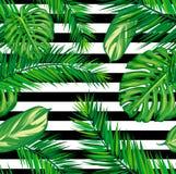 美丽的无缝的热带与棕榈叶的密林花卉样式背景 皇族释放例证