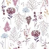 美丽的无缝葡萄酒明亮的植物的样式,许多种类f 向量例证
