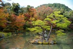 美丽的日本庭院在日本的秋天 免版税库存图片