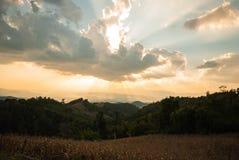 美丽的日落和金天空 免版税图库摄影