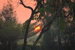 美丽的早晨treeline和天空,作为太阳在一个豪华的泰国庭院公园开始上升在它后, 库存图片