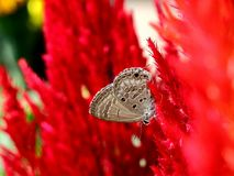 美丽的昆虫 免版税图库摄影