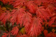 美丽的明亮地色的秋天叶子 免版税库存照片
