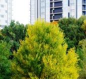 美丽的明亮的秋天树 免版税图库摄影