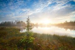 美丽的明亮的黎明日出日落寒带草原森林狂放的湖云杉前景红色太阳射线光芒通过雾反射云彩 图库摄影