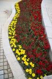 美丽的春天培养花床 免版税库存照片