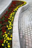 美丽的春天培养花床 免版税库存图片