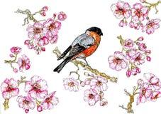 美丽的春天开花和明亮的鸟水彩例证 库存图片